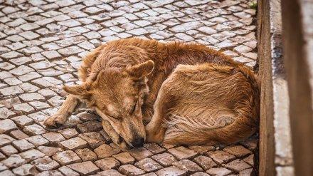 На содержание и усыпление бездомных собак в 2 районах Воронежа потратят 4 млн рублей