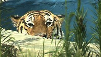 Директор воронежского зоопарка: «Я проголосовал за кличку Буран»