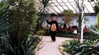 Одним из экскурсоводов Воронежского зоопарка стал Чебурашка