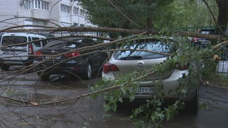 На севере Воронежа упавшие под напором ветра деревья повредили пять машин