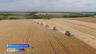 Вопреки засухе. Как воронежские аграрии ведут «битву» за урожай