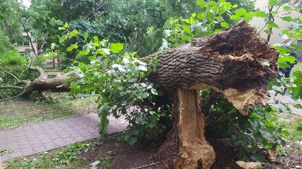 В Воронеже сильный ветер повалил деревья в школьном дворе и на детском пляже