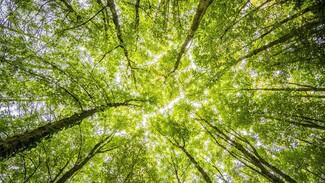 В Воронеже создадут углеродный полигон