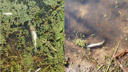 Власти прокомментировали ситуацию с замором рыбы в притоке Дона в Воронежской области