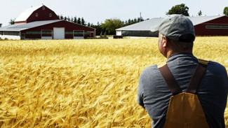 На поддержку воронежских аграриев выделено более 7 миллиардов рублей
