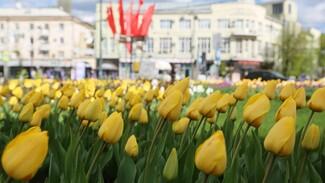 В Воронеже к лету обустроят около 200 цветников