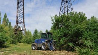 Воронежские энергетики до конца года очистят 1,4 тыс. га просек в зонах ЛЭП