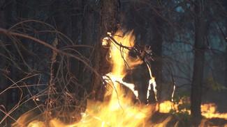 Лесной пожар в Воронежской области тушат второй день подряд
