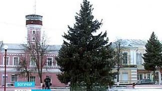 Вандалы изуродовали ёлку на главной площади Богучара