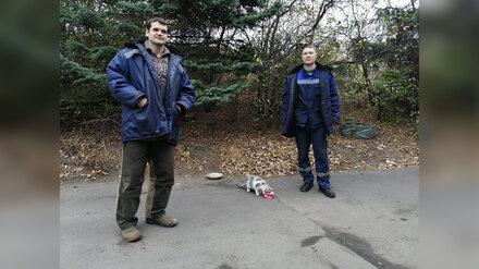 В Воронеже упавшую в колодец кошку спасли с помощью докторской колбасы