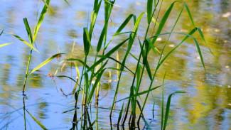 В реке воронежского села нашли зарезанного мужчину, убитого из ревности
