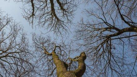 Спилившего полсотни деревьев воронежского сельчанина оштрафовали почти на 1 млн