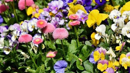 В Воронеже начали поиск подрядчика для ухода за растениями в Кольцовском сквере