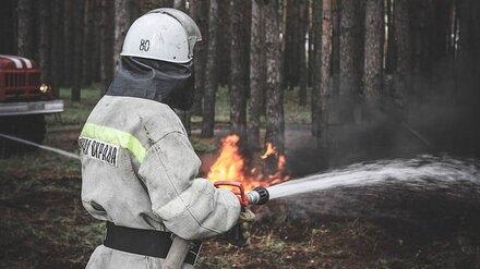 Ещё один ландшафтный пожар вспыхнул в Воронежской области