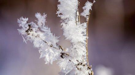 Воронежская область встретит зиму резким похолоданием