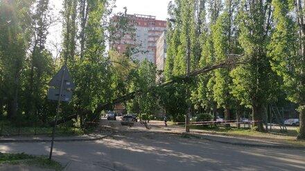 Большое дерево нависло над дорогой у воронежского лицея
