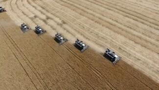 Вопреки адской жаре в Воронежской области собрали 1 млн тонн зерна