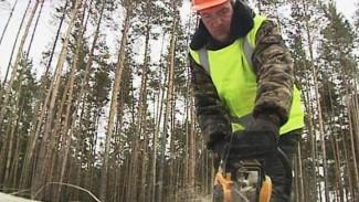 Воронежские леса избавляют от больных деревьев – идёт выборочная вырубка