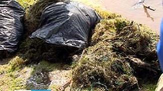 На Воронежском водохранилище прошла уборка