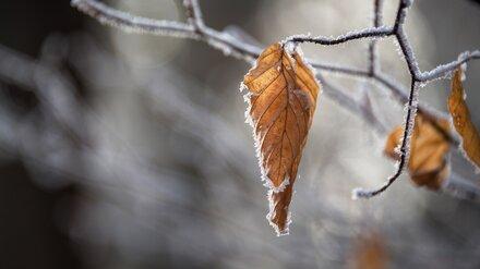 «Ждём первый снег». Воронежские синоптики дали прогноз на октябрь