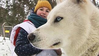 Новый вид развлечения с животными в Воронеже – поездки на упряжках хаски