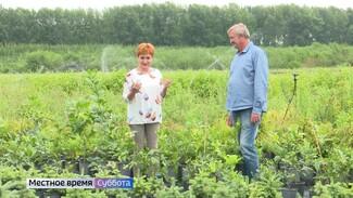 Воронежцам показали, как вырастить лимоны на своём участке