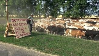 Число заболевших COVID-19 в закрытом на карантин воронежском селе достигло 50
