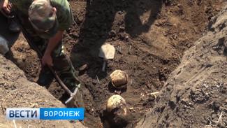 В Воронежской области нашли останки 12 красноармейцев