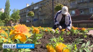 Каким видят Воронеж российские и зарубежные дизайнеры в будущем