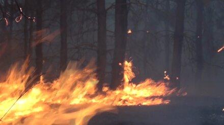 В Воронежской области локализовали крупный лесной пожар у села