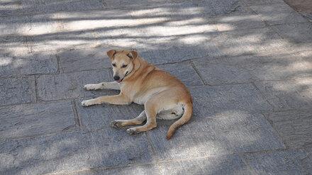 Прокуратура потребовала от мэрии разобраться с терроризирующими воронежский ЖК собаками