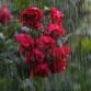 Жителей Воронежской области предупредили о грозовых дождях и граде