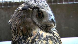 Воронежский зоопарк открывается после месячного карантина, птиц там пока что нет