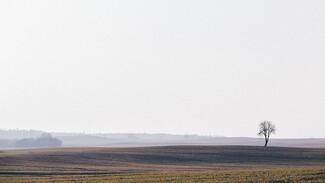 Холдинг «Продимекс» завершил полевые работы в Воронежской области