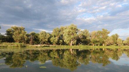 В воронежском заповеднике откроют экотропу по местам обитания русской выхухоли