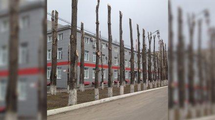 Блогера Илью Варламова шокировала варварская обрезка деревьев в Воронеже