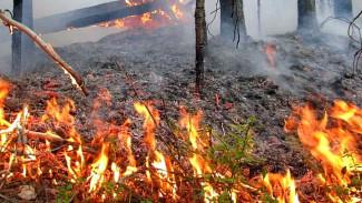 Высокую степень пожарной опасности присвоили 5 районам Воронежской области