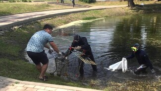 На дне озера в Воронеже нашли 4 магазинные тележки