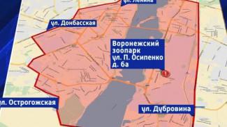 В Воронеже определена угрожаемая зона из-за карантина по птичьему гриппу