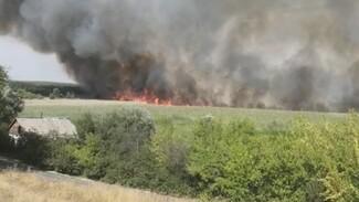 В Воронежской области несколько суток тушат болота