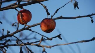 На месте яблоневых садов в Воронеже появится миллион квадратных метров