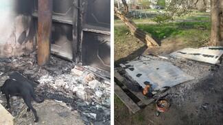 В Воронежской области сожгли частный приют для бездомных собак