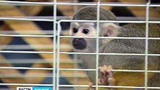 В Воронежском зоопарке новый обитатель