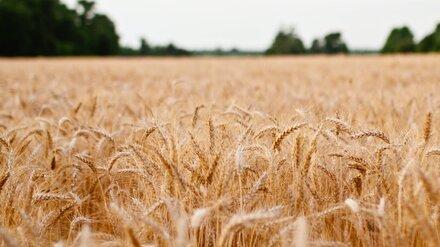 Пропавшего под Воронежем 8-летнего мальчика нашли в поле