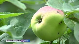 Воронежский агроном рассказал, как защитить яблоки и помидоры от болезней
