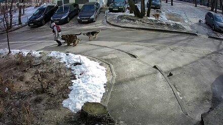 Мэрия прокомментировала видео с нападением стаи собак на воронежскую школьницу