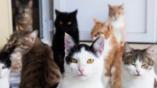 В Воронеже шесть кошек бросили умирать в запертой квартире после смерти хозяйки