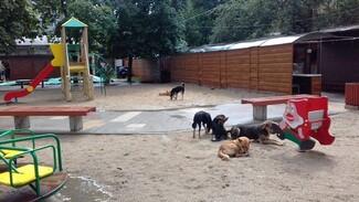 Воронежцы: «Свора бездомных собак оккупировала детскую площадку»