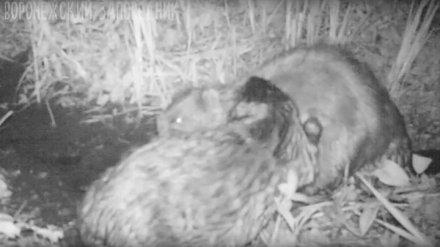 Воронежский заповедник поделился милым видео с самыми верными «в браке» животными