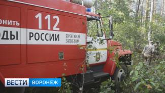 В Воронежском заповеднике из-за поджога полыхал лес